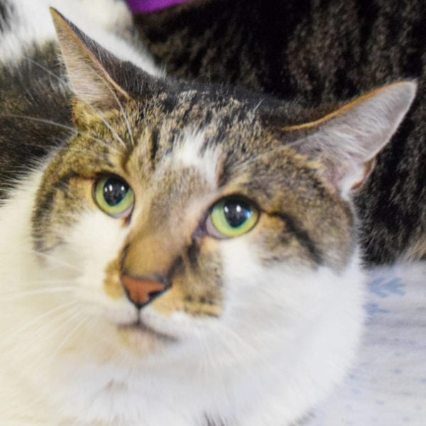 Patches (declaw) Animal House Shelter in 2020 Animals