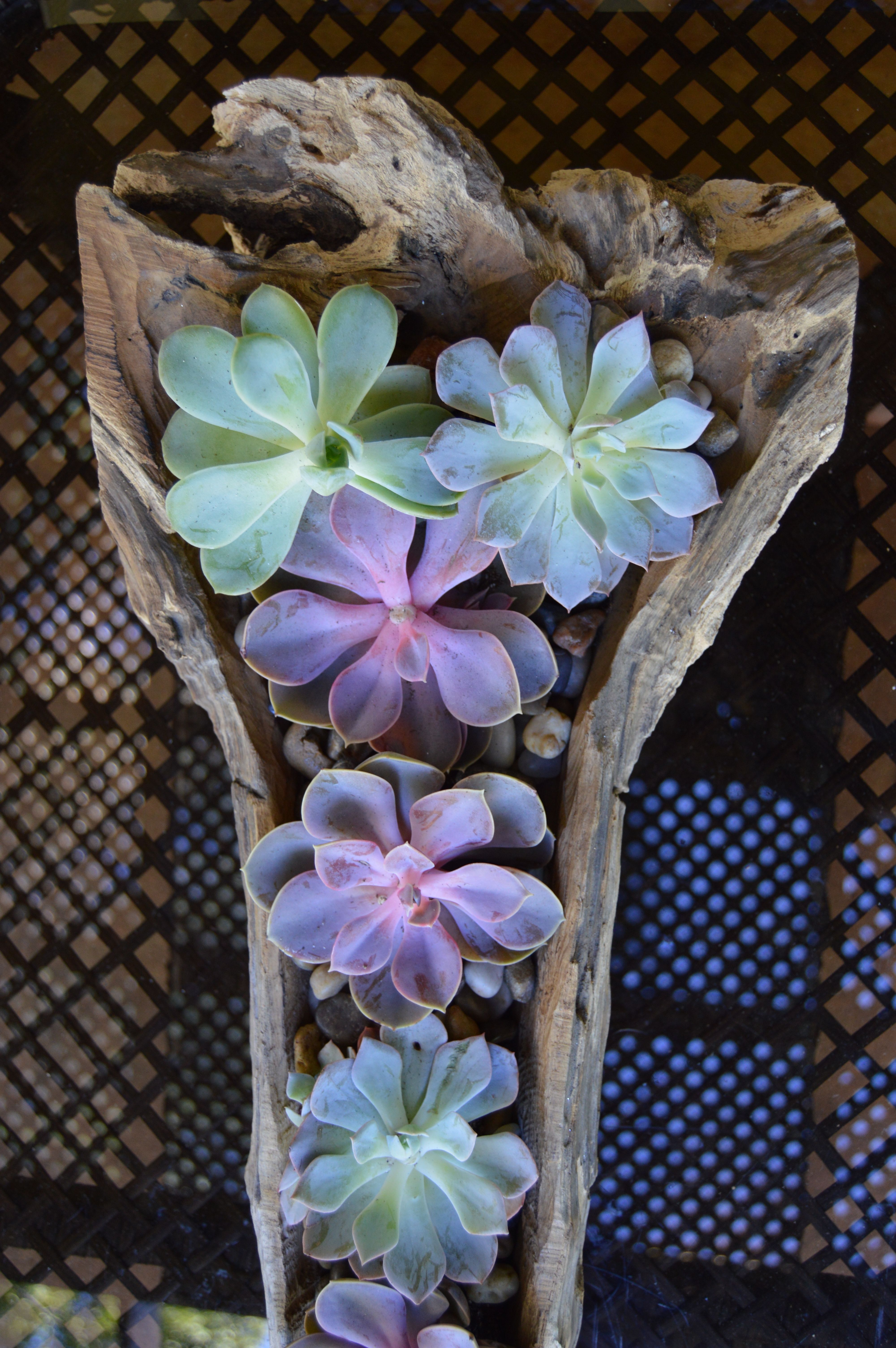 When looking for floral alternatives, don't forget about the unique quality and colors of the ever popular Succulents!