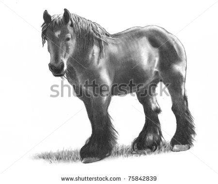 belgum draft horse drawing - Buscar con Google