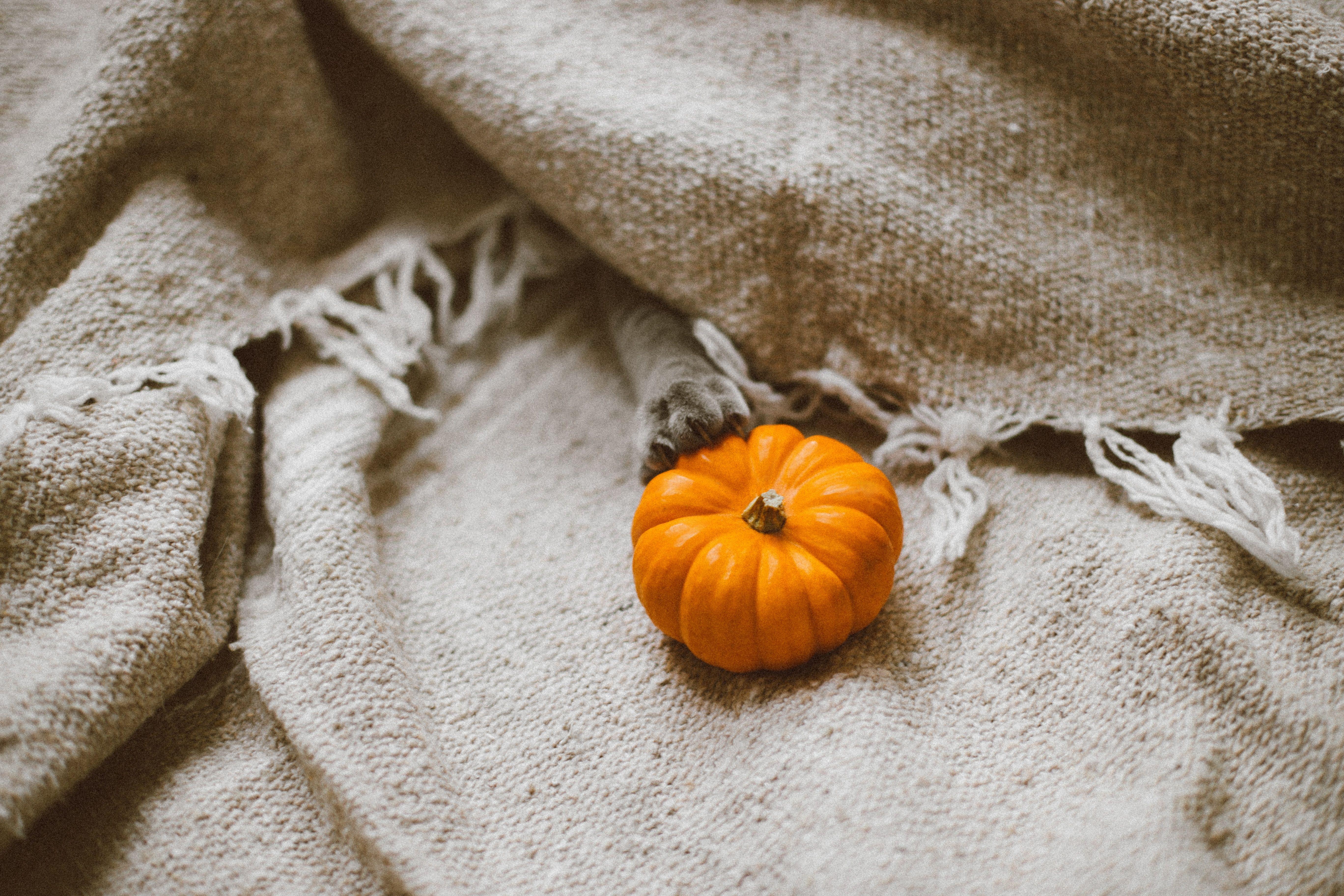 Pumpkin on a blanket