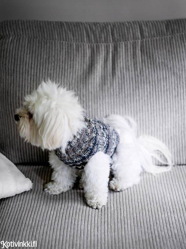 Koiran Heijastava Neule With Images Koiran Vaatteita Koira Neuleet