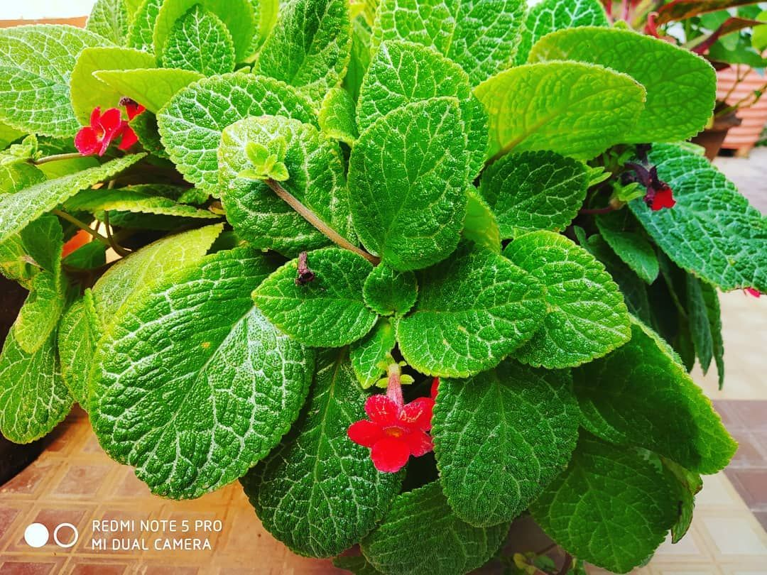 #greenleaf #plants #red #flowery #high #sharpness #saturation #photographyday #photooftheday