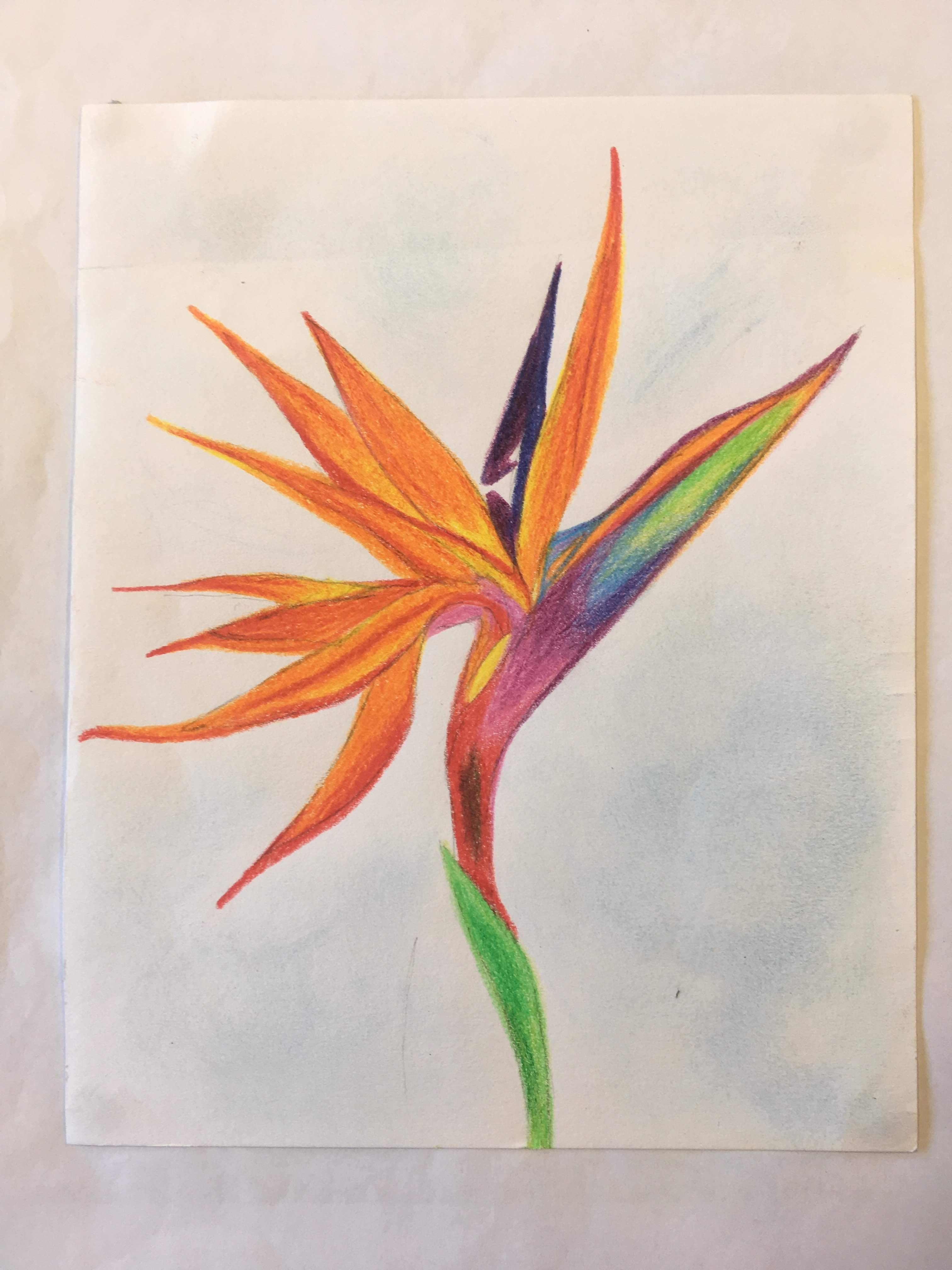 It's just a picture of Dramatic Bird Of Paradise Drawing