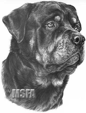 Omg Un Rottweiler Rottweiler Tattoo Rottweiler Dogs