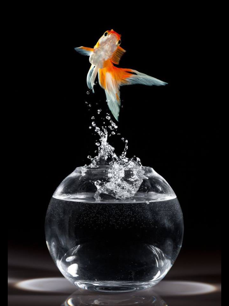 Pin By Julian Olckers On Perfect Timing Pics Goldfish Dark Backgrounds Animal Wallpaper