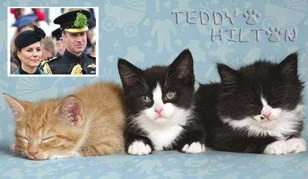 An London Animal Shelter Named A Litter Of Cats After Royal Baby Betting Favorites Happy Animals Cat Breeder Cats