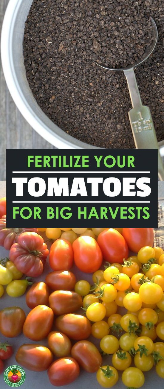 Get Ultimate Harvests By Fertilizing Your Tomatoes Right 400 x 300