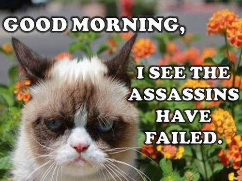 Good Morning I See The Assassins Have Failed Grumpy Cat Funny Grumpy Cat Memes Grumpy Cat Humor