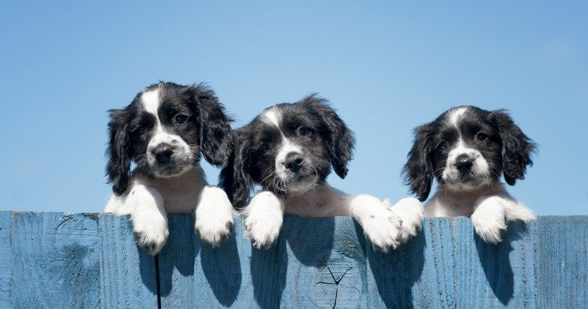 Puppy socialization checklist akc