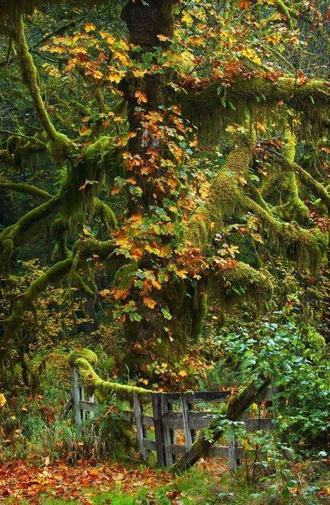 O portão da floresta...