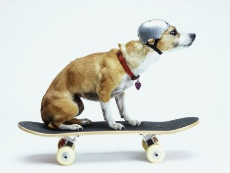 Photo of Dog with Helmet Skateboarding Photographic Print by Chris Ro…