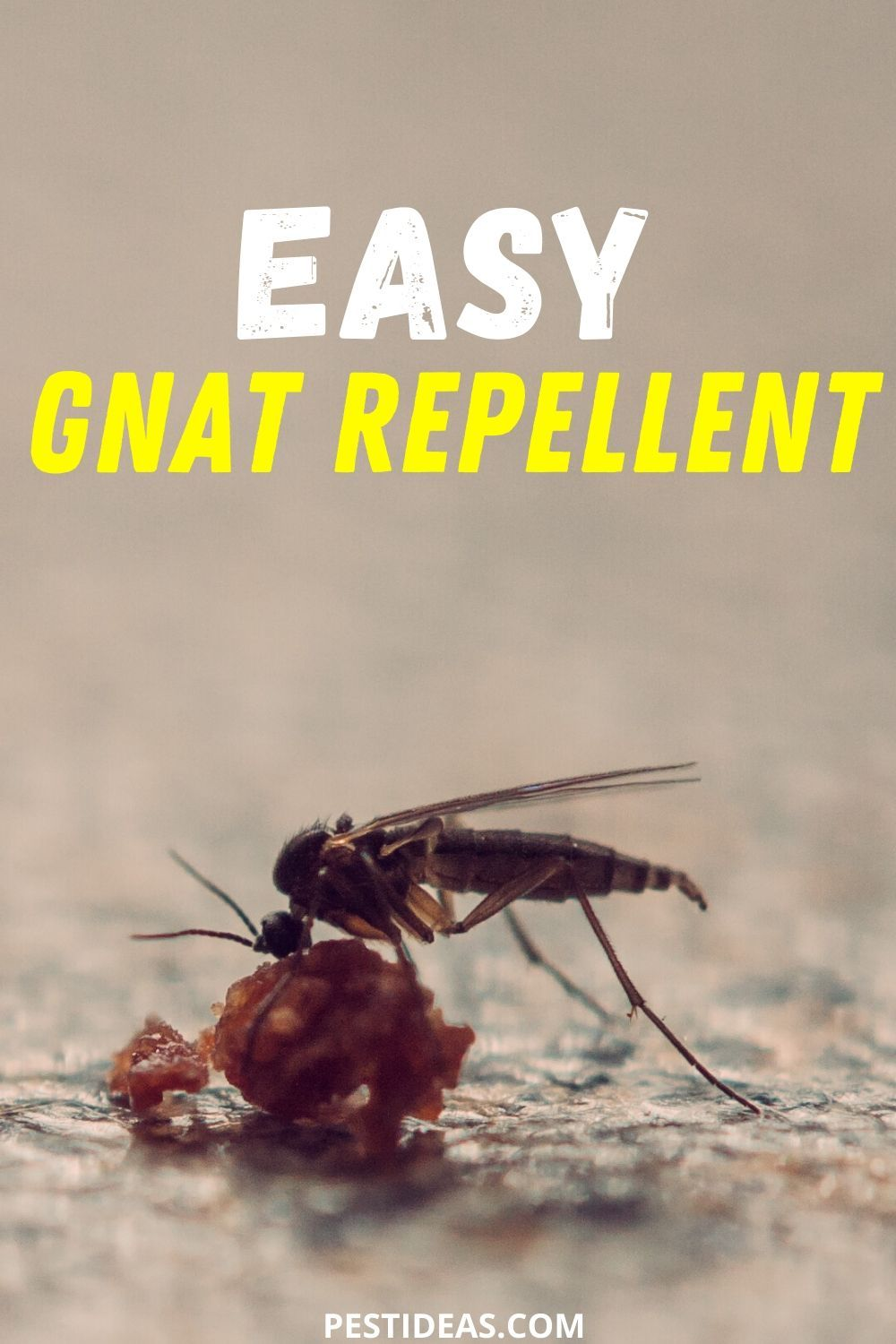 How To Get Rid Of Biting Gnats In My House
