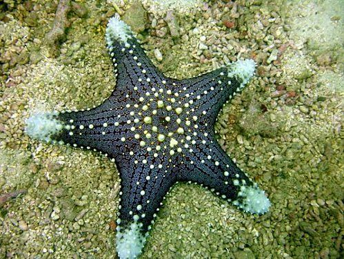 Etoilede Mer Stars Addict Ocean Starfish Painting