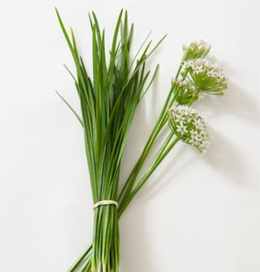 Chinese Leeks Garlic Chives Herb Seed Johnny S Selected Seeds Herb Seeds Chives Herb Organic Seeds