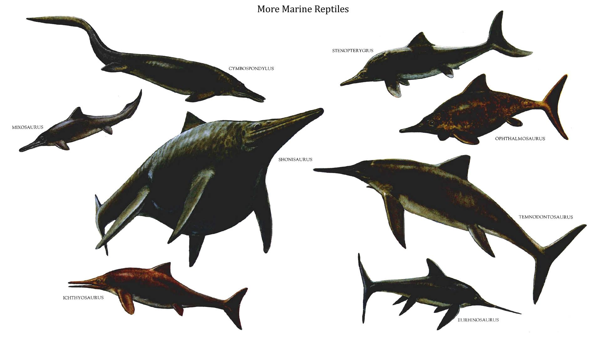 """A reptilian dinosaurs picture entitled """" marine reptiles 2"""