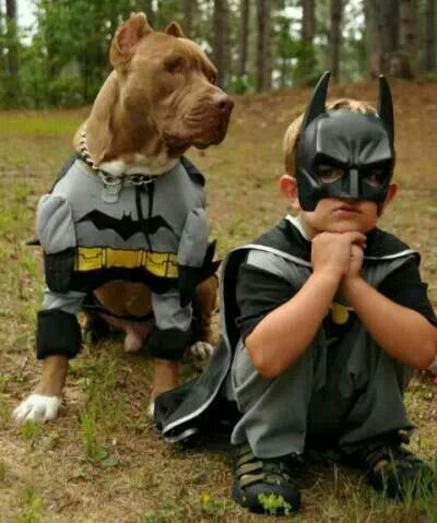 Batman Pitbulls Pets Dogs