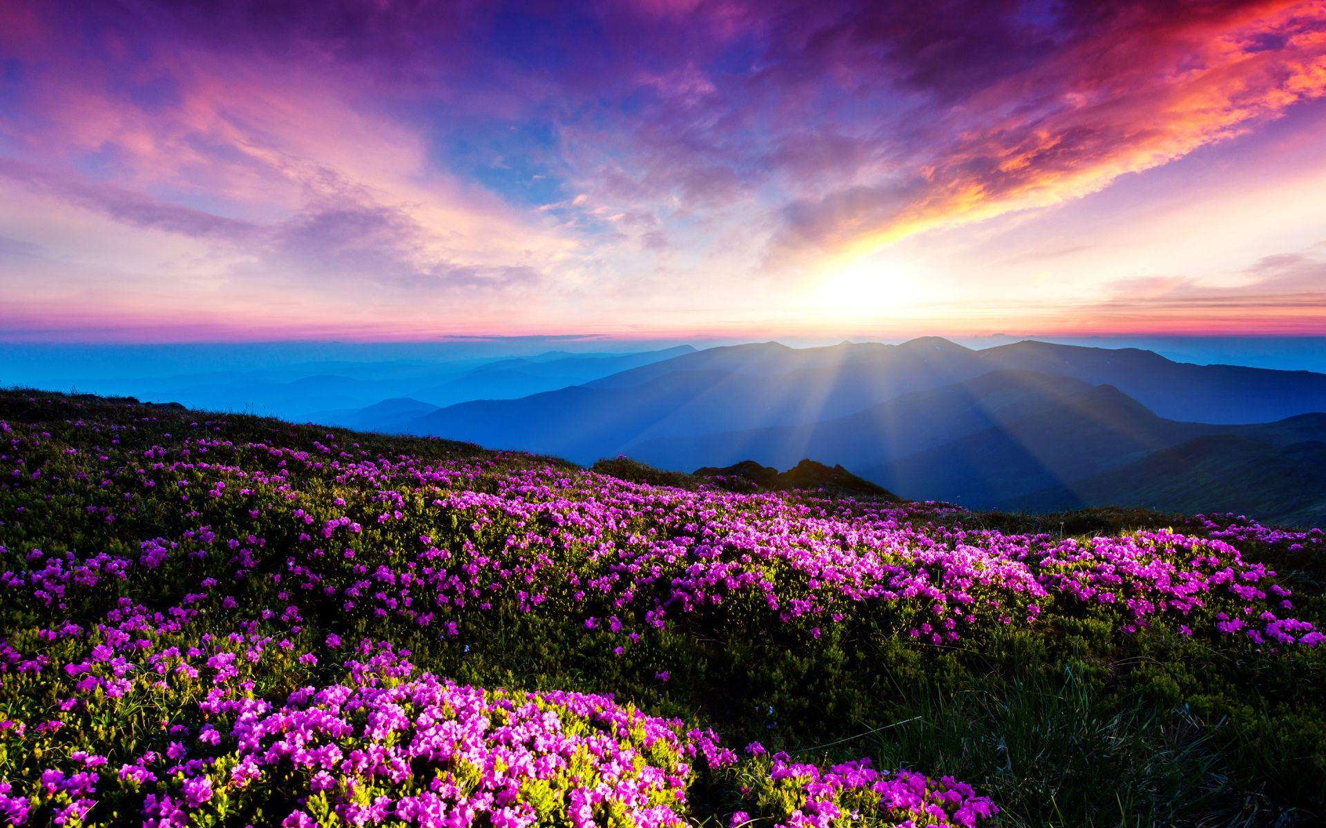 Terre Nature Montagne Nuage Fleur Pink Flower Rayon De Soleil Paysage Ciel Fond D Ecran Paysage Ciel Paysage Photographe Nature