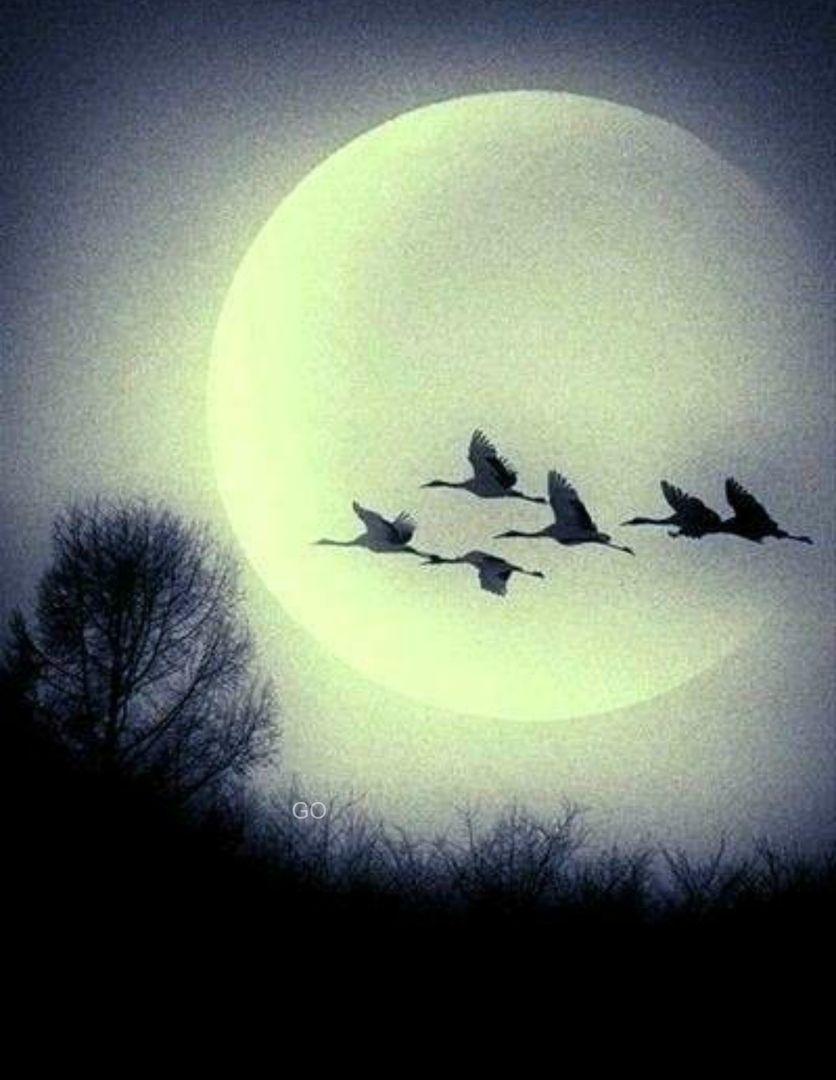 О Счастье-просто в 2020 г | Луна, искусство, Уроки ...