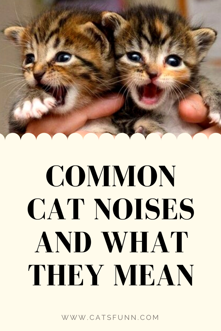 Common Cat Noises And What They Mean Cat Noises Cats Kitten Care