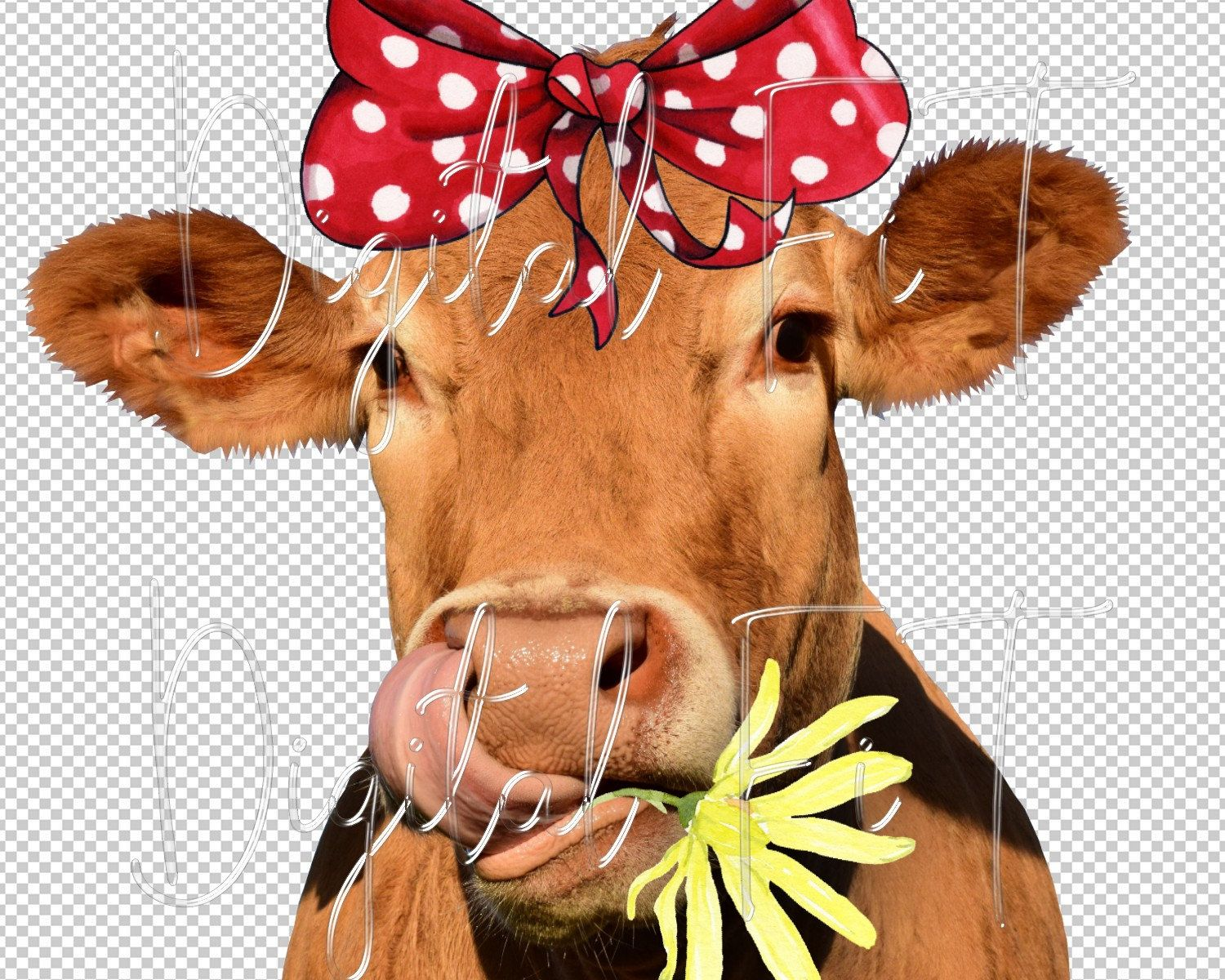 Funny Cow Face Png Digital File Commercial Use Instant Etsy In 2021 Cows Funny Cow Face Cow