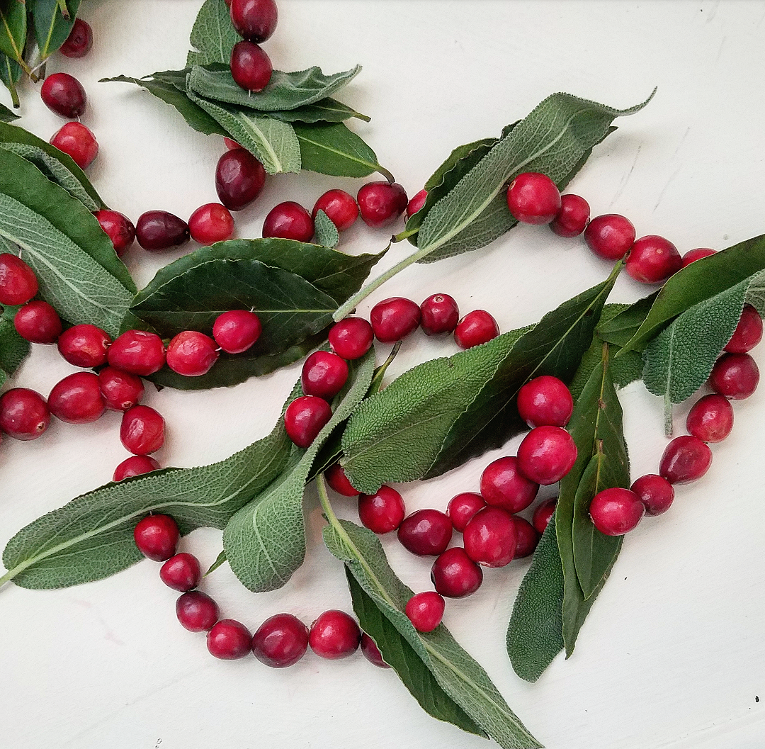 How To Make A Beautiful Fresh Herb Garland Cranberry Sage Bay Leaf Diy Christmas Garland Cranberries Decor Fresh Christmas Garland