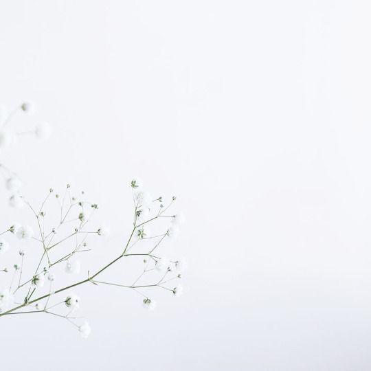L E A B O Flower Aesthetic Flower Illustration White Aesthetic