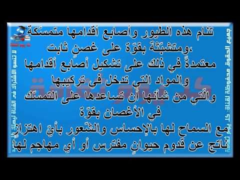 طرق نوم الحيوانات هل تعلم كيف تنام الحيوانات مثل الأسد والفهد والقرد والنسور وغيرها Arabic Calligraphy Calligraphy