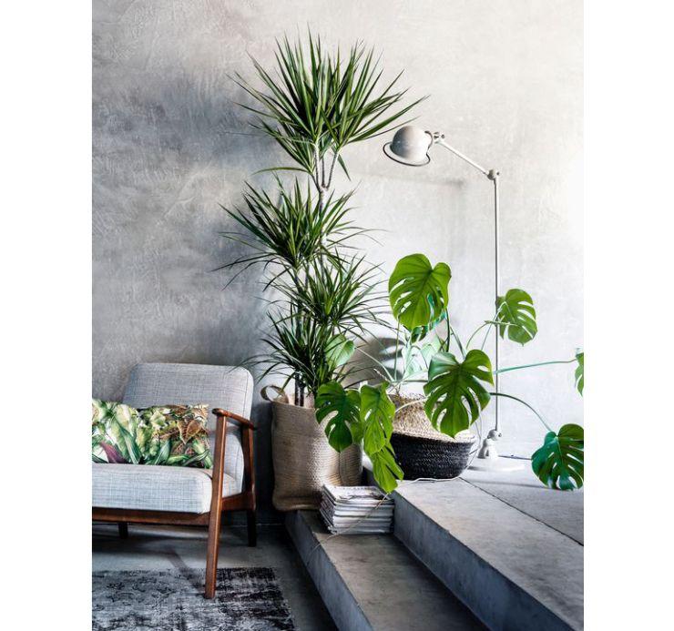 Een grote kamerplant in huis: zo style je \'m - Office | Pinterest ...