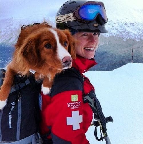 Watch The Life And Times Of An Avalanche Rescue Dog In Alaska