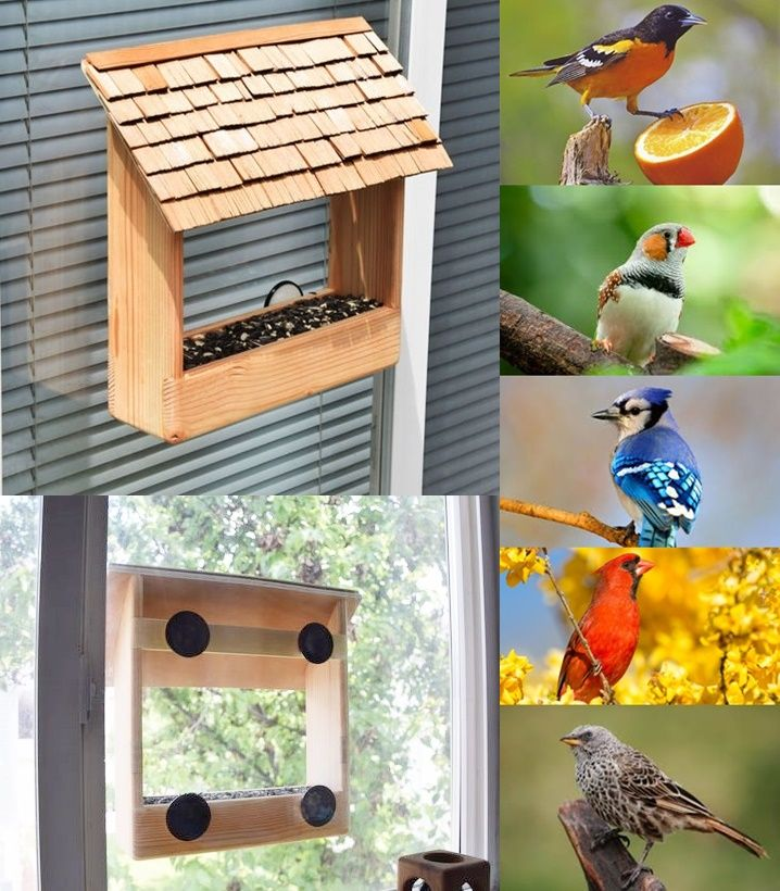Build A See Through Window Bird Feeder Diy Project Window Bird