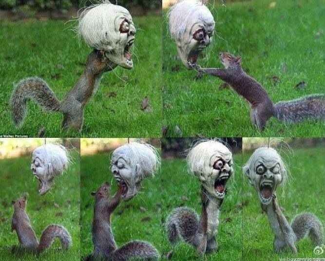 A Squirrel Got His Head Stuck In A Halloween Decoration And