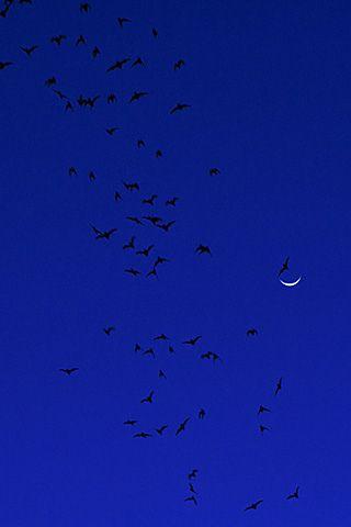 Bats and quarter moon