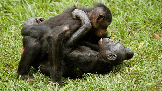 Bonobo apes homosexuality and christianity
