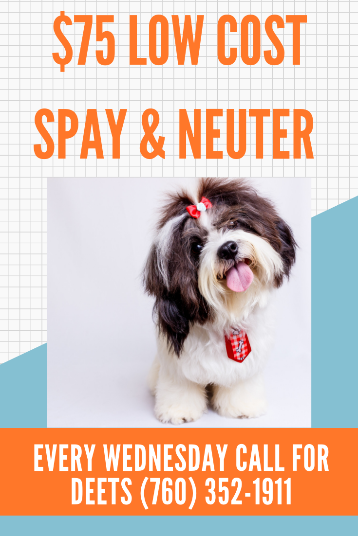 Every Wednesday we have lowcost spay and neuter for cat