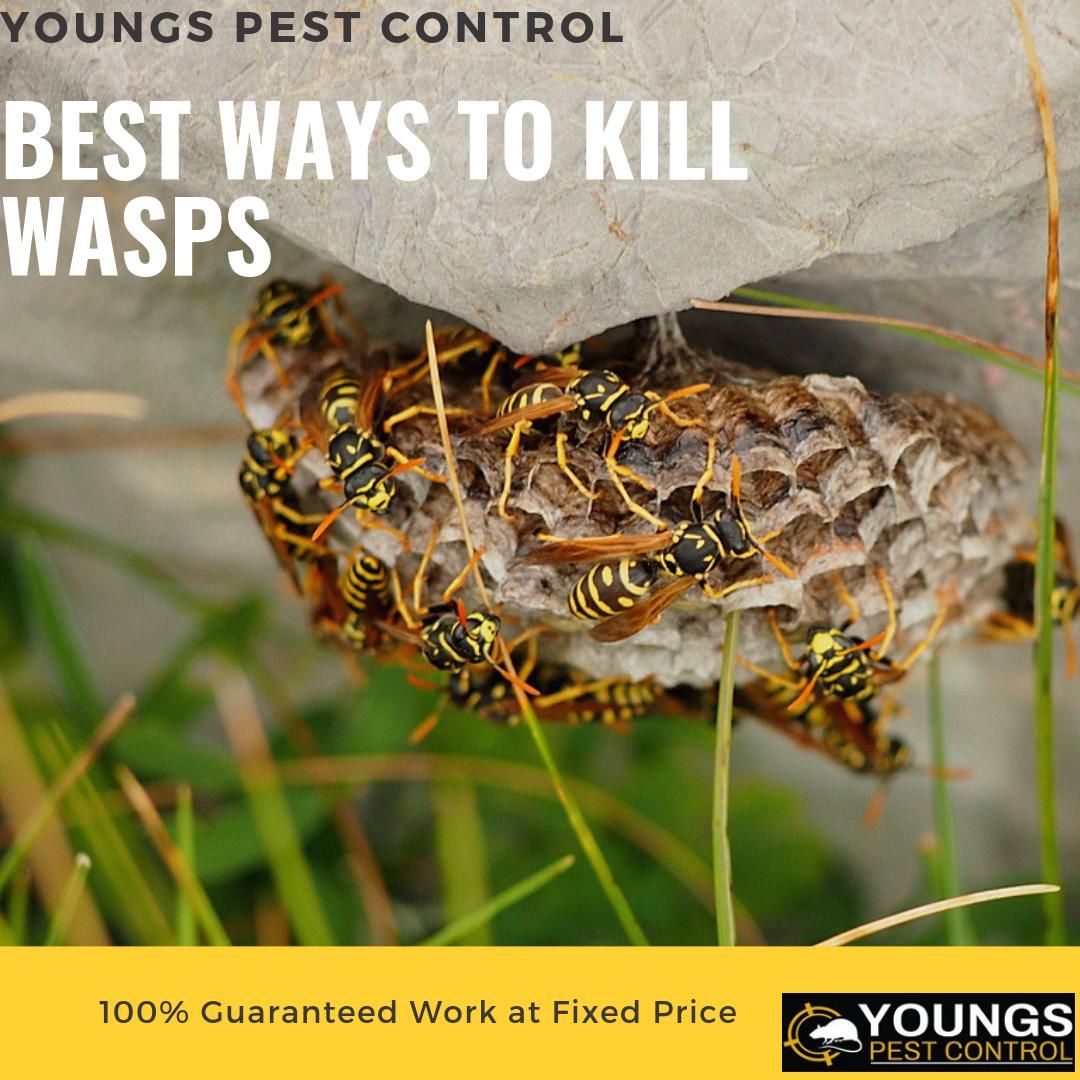 c278030c2593a9cfac31472fc1629fcd - How To Get Rid Of Wasps In A Stone Wall