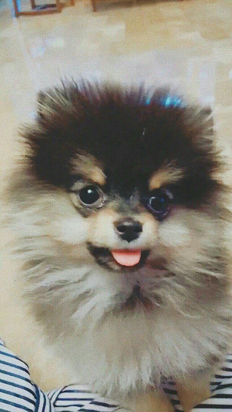 Yeontan Bts V Hewan Anjing Bts