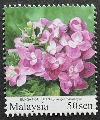Stamp Hydrangea Macrophylla Malaysia Garden Flowers Sg My 1669c Selos