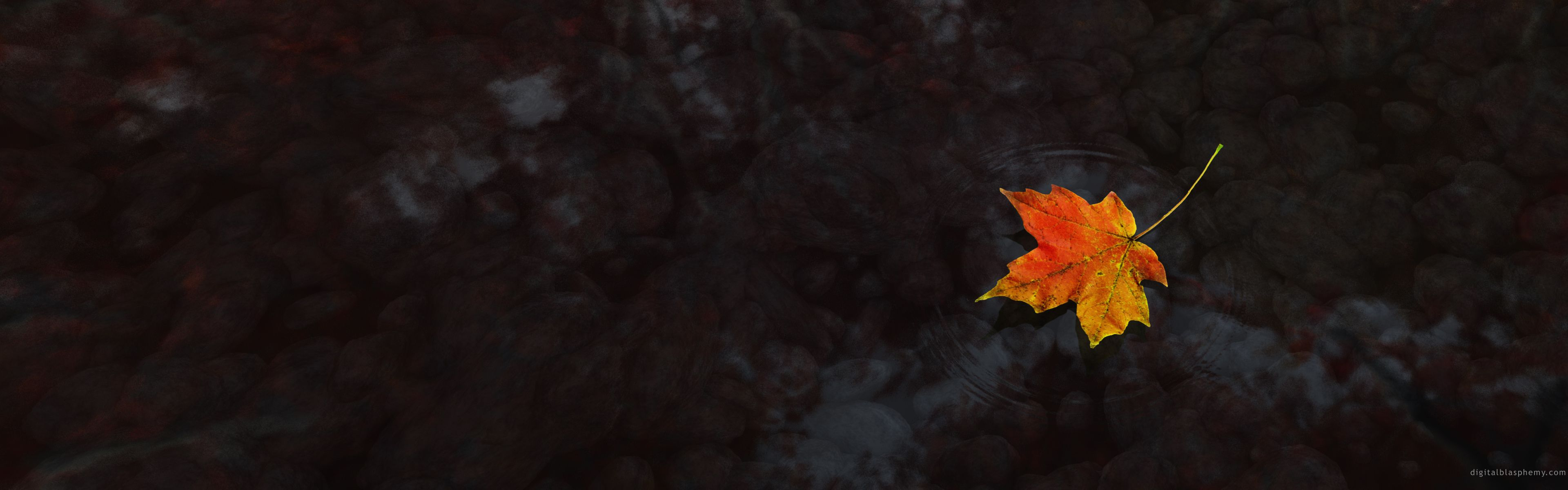 Autumn Leaf Over Water Leaf Wallpaper Hd Wallpaper Android Wallpaper