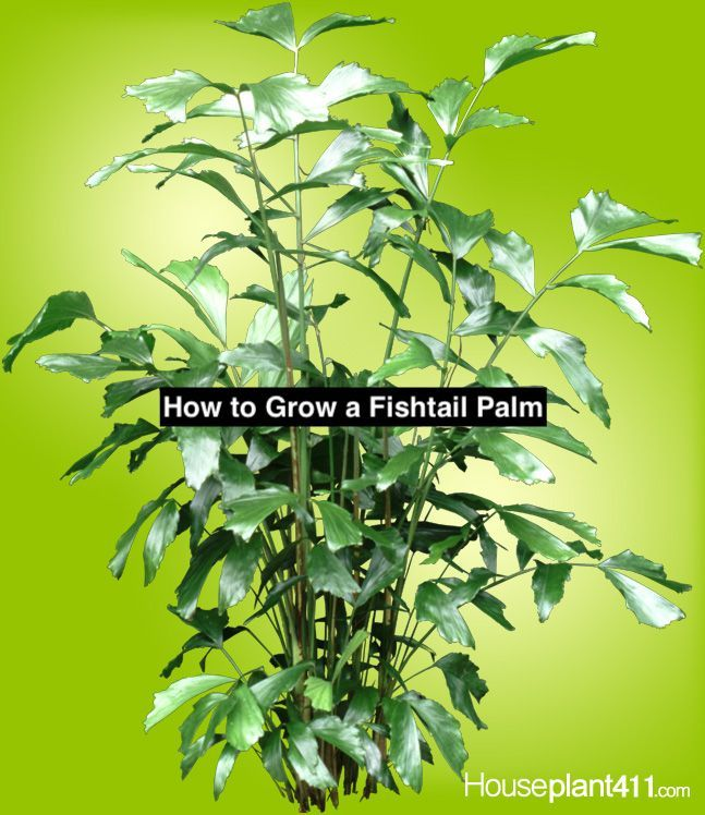 If you love indoor palm plants but are getting tired of the usual ones its tiindoor