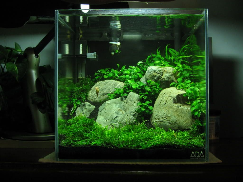 Ada 30c 27 watts inert black sand substrate low tech tank for Plante aquarium