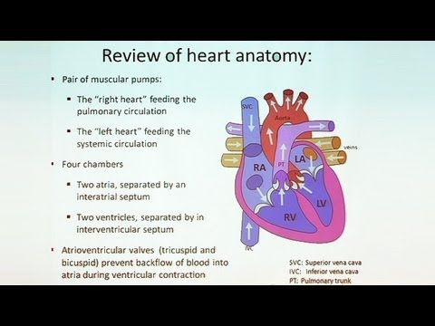 Follow Your Heart Anatomy Of The Cardiovascular System Part Ii