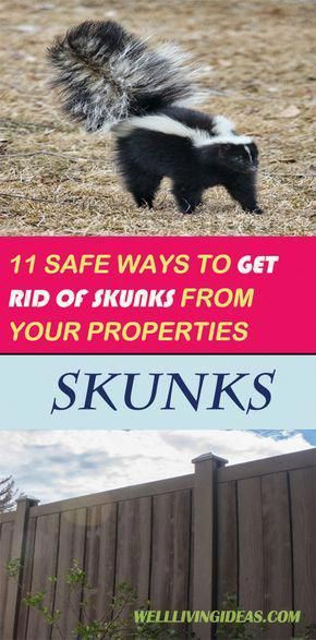 How to Get Rid of Skunks Safely - The best method, by far ...