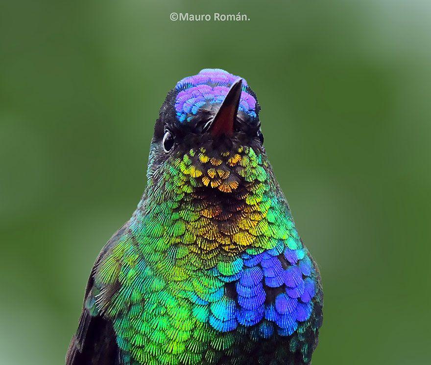 Vivid Hummingbird Closeups Reveal Their Incredible Beauty - Photographer captures amazing close up photos of hummingbirds iridescent feathers