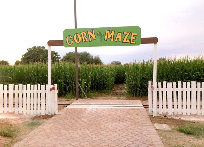 Get Lost In These 9 Awesome Corn Mazes In Arizona This Fall