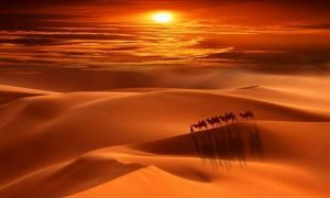 camels, sand and sunset