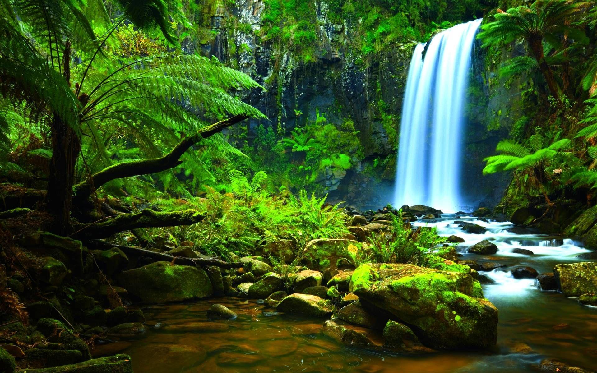 Rainforest Wallpaper Desktop 9hm Waterfall Wallpaper Amazon Rainforest Amazon Forest