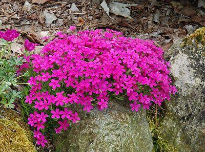Rock Garden spring 2