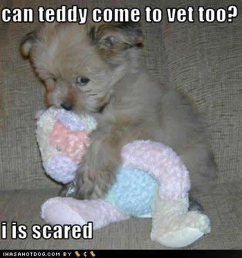 Cute Puppy Funny Animals With