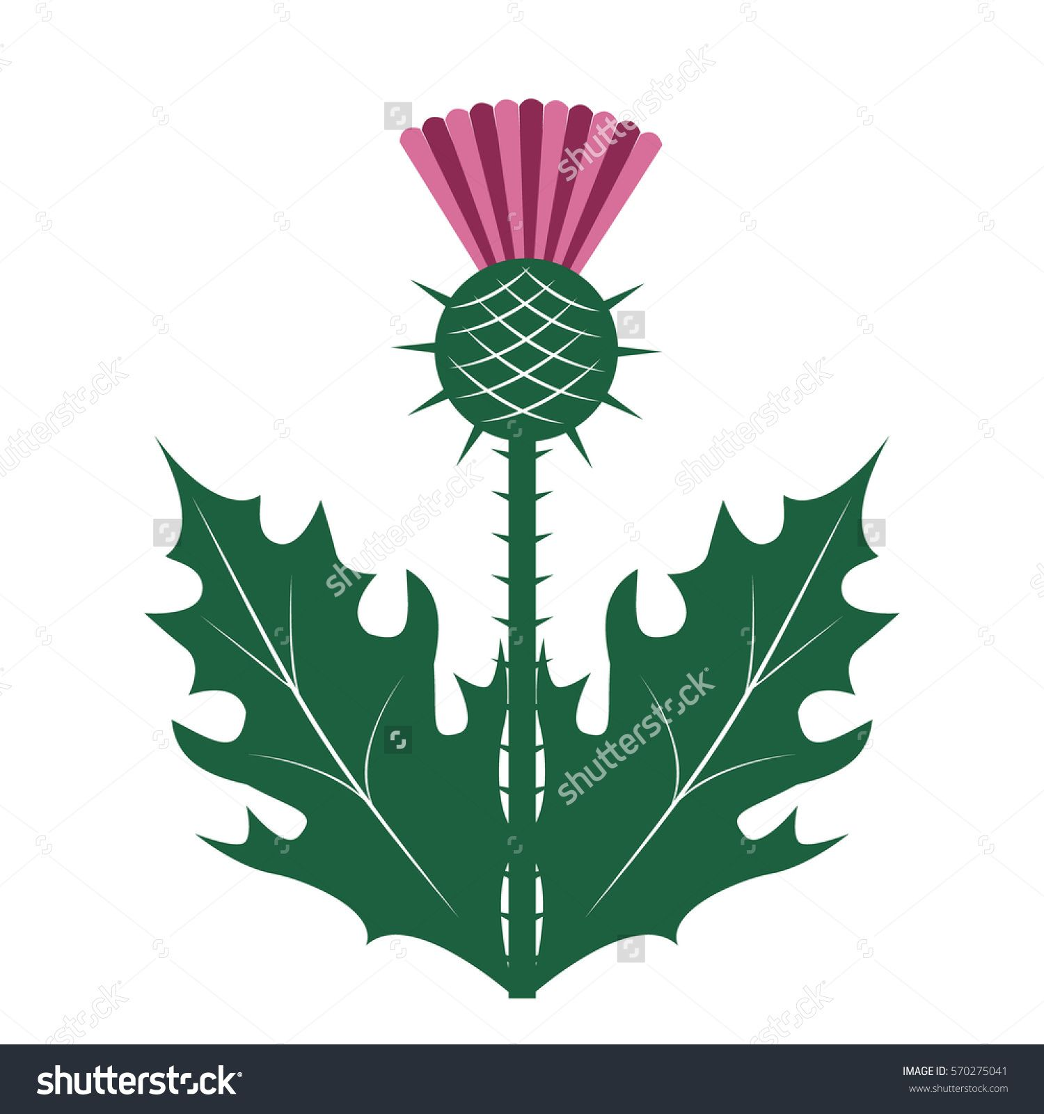 Thistle symbol of scotland vector illustration flora thistle symbol of scotland vector illustration buycottarizona Image collections