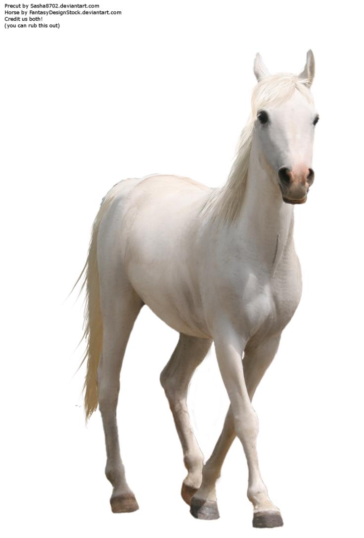 Horse Pre Cut2 Horse Background Horses Background Wallpaper For Photoshop